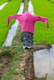 Spaventapasseri nel giacimento del riso, Tailandia Fotografie Stock