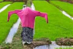 Spaventapasseri nel giacimento del riso, Tailandia Fotografia Stock Libera da Diritti
