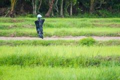 Spaventapasseri nel giacimento del riso thailand immagine stock libera da diritti