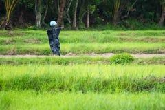 Spaventapasseri nel giacimento del riso thailand immagini stock