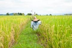 Spaventapasseri nel ricefield fotografie stock libere da diritti