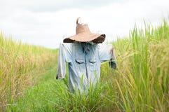 Spaventapasseri nel ricefield Immagini Stock Libere da Diritti