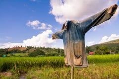Spaventapasseri in risaie della Tailandia del Nord Immagini Stock