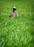 Spaventapasseri rustico casalingo in un giacimento del riso. L'Indonesia Fotografie Stock