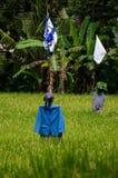 Spaventapasseri in su vestito Fotografie Stock Libere da Diritti