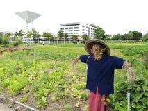 Spaventapasseri in un'azienda agricola di verdure Immagini Stock
