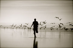 Spavento degli uccelli Immagini Stock