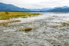 Spawning chum salmon (Oncorhynchus keta) in Chehalis River, Fras Royalty Free Stock Images