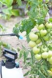 Spaying warzywa z wodą lub pestycydami Obraz Stock