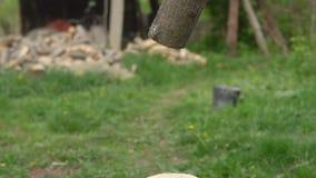 Spazii in bianco per l'inverno Un uomo che taglia legno a pezzi nell'iarda video d archivio