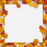 Spazio in bianco bianco con le foglie di acero di autunno Fotografie Stock Libere da Diritti