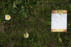 Spazio in bianco del fiore Immagine Stock Libera da Diritti