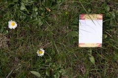 Spazio in bianco del fiore Fotografie Stock Libere da Diritti