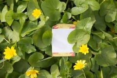 Spazio in bianco del fiore Fotografia Stock Libera da Diritti