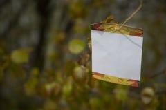 Spazio in bianco dell'albero Immagine Stock Libera da Diritti