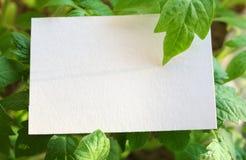 Spazio in bianco della scheda Fotografie Stock Libere da Diritti