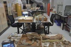 Spazio di funzionamento archeologico del laboratorio per esaminare i manufatti fotografia stock libera da diritti