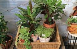 Spazio verde dell'interno di rilassamento con le piante tropicali Immagine Stock Libera da Diritti