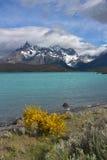 Spazzi il cespuglio sulla banca del lago Pehoe in parco nazionale Torres del Paine nel Cile Immagini Stock Libere da Diritti