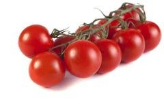 Spazzola dei pomodori maturi Fotografia Stock Libera da Diritti
