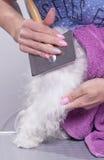Spazzola del pettine di asciugacapelli del cane Fotografia Stock