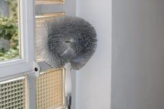 Spazzola della polvere che si appoggia finestra Fotografie Stock Libere da Diritti