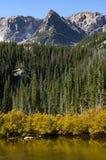 Spazzola dorata lungo Fern Lake Vertical immagine stock