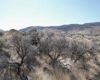 Spazzola prudente in un alto paesaggio del deserto Fotografia Stock Libera da Diritti