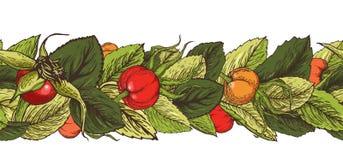 Spazzola senza cuciture grafica disegnata a mano con le bacche e le foglie del cinorrodo illustrazione di stock