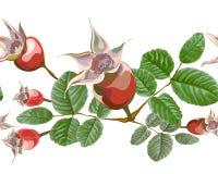 Spazzola sfacciata dei fiori delle anche della rosa canina Fotografie Stock Libere da Diritti