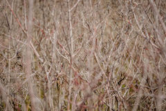 Spazzola spessa della foresta Immagini Stock