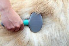 Spazzolatura del cane Immagine Stock