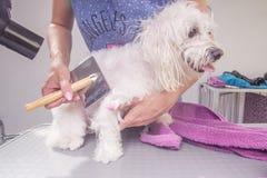 Spazzolatura del pettine di asciugacapelli del cane Fotografie Stock Libere da Diritti