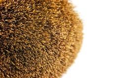 Spazzole della polvere. Fotografia Stock Libera da Diritti