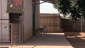 SPCA (香港爱护动物协会) 影视素材