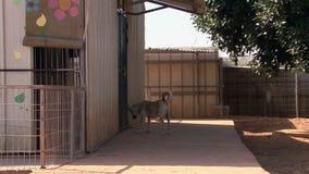 SPCA (de Maatschappij voor de Preventie van Wreedheid aan Dieren) stock footage