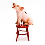 Speak Up ! Pig on Chair Stock Image