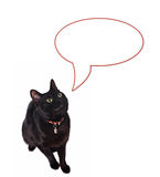 Speaking cat. Black cat with dialog ballon isolated on white Royalty Free Stock Photo