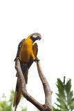 Speaking parrot. Against bright sky in a zoo Royalty Free Stock Photo