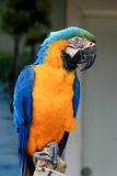 Speaking parrot in a park Stock Image