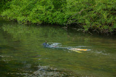 Spear fishing in a shallow river Royalty Free Stock Photo