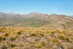 Spear grass plants growing on barren hills above Awatere valley in New Zealand. Spear grass plants growing on barren hills above Awatere valley, South Island Royalty Free Stock Images