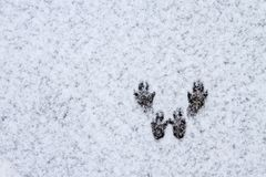 Winter covered valley in Spearfish, SD. Squirrel Tracks in the snow stock image