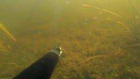 Spearfishing猎人水下的里海 影视素材