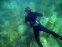spearfishing royaltyfri bild