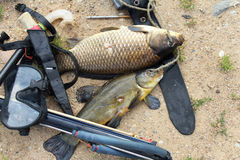 Spearfishing. Equipment for spearfishing on the background of sand royalty free stock photo