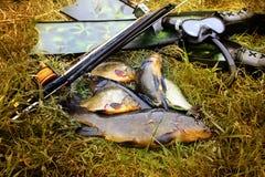 spearfishing Unterwassergewehr, Flossen und Fische auf der Ufergegend lizenzfreies stockbild