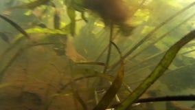 Spearfishing w rzece, jezioro zbiory
