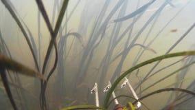 Spearfishing w rzece, jezioro zdjęcie wideo