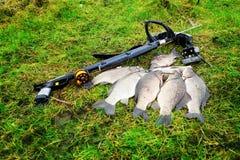 spearfishing Wielki karp na trawie obrazy stock
